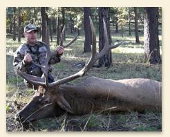 large-elk